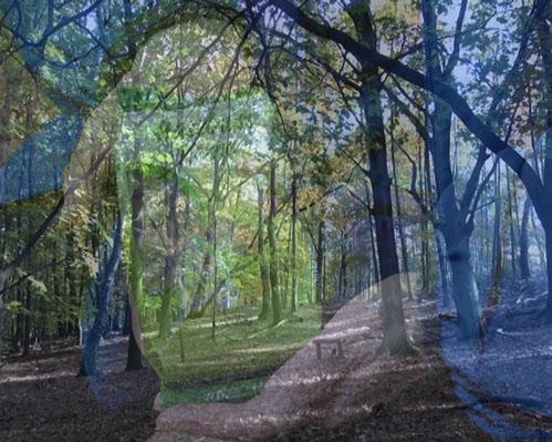Geheimnisvolle Waldsituation