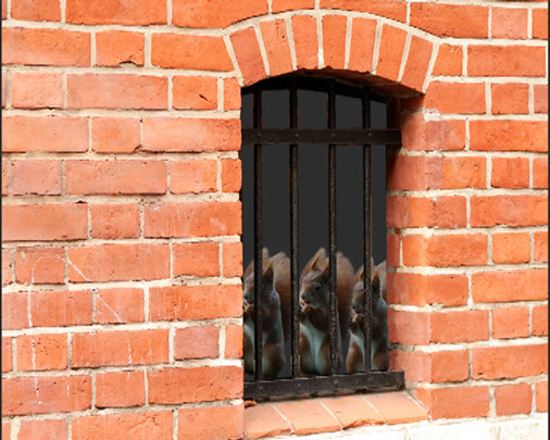 Eichhörnchen im Gefängnis