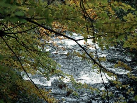 Auch der Harz kommt nach Ansicht der Forscher als Versteck in Frage